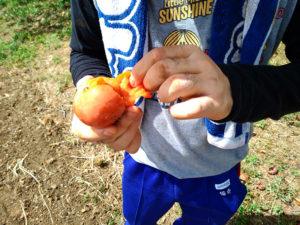 恵風会の甘柿