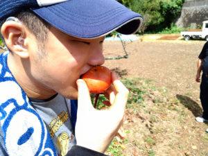 そよ風の里の甘柿美味しい