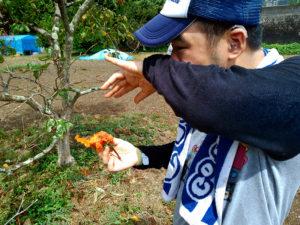 長崎市宮崎町の畑の甘柿