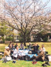 桜町公園でお花見